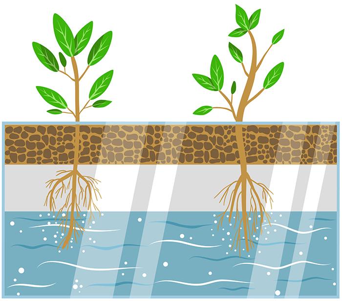 coltivazione idroponica della Vegus Food